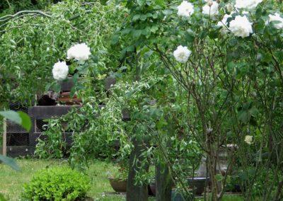 jardin2019-6